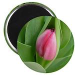 Pink Tulip Bud on a 2.25