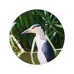 Black-crowned Night Heron 3.5