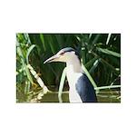 Black-crowned Night Heron Rectangle Magnet