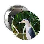 Black-crowned Night Heron 2.25