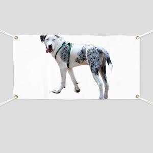 Catahoula Cur Puppy Banner