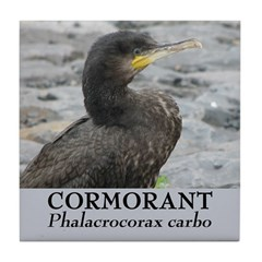 Wild Dutch Cormorant Tile Coaster