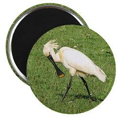 Eurasian Spoonbill Magnet