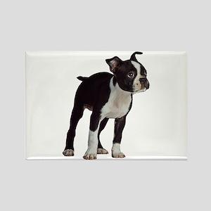 Boston Terrier Puppy Magnets
