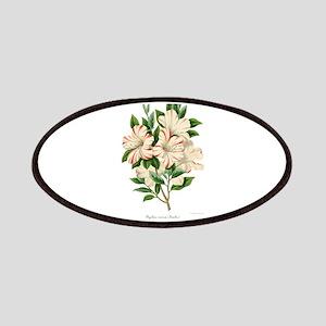 Azalea indica beaulii Patch