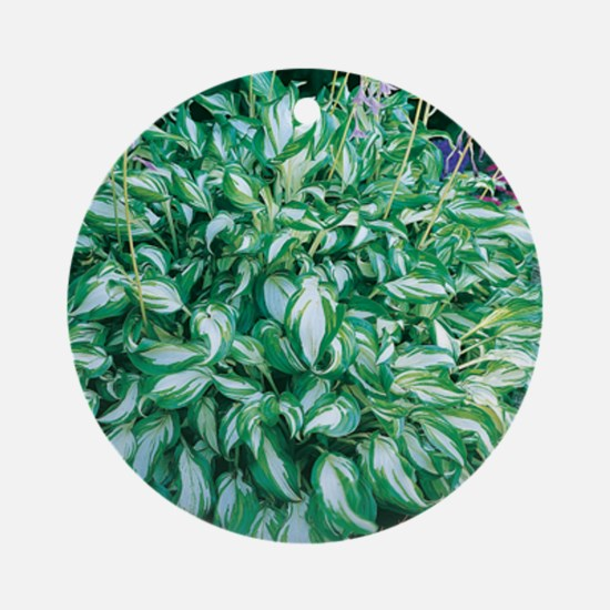 Variegated Hosta Ornament (Round)