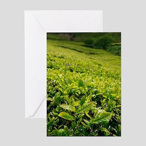 Tea gardens Greeting Cards