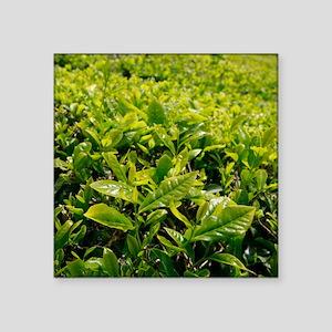 Tea gardens Sticker