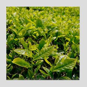 Tea gardens Tile Coaster