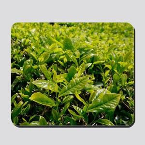 Tea gardens Mousepad