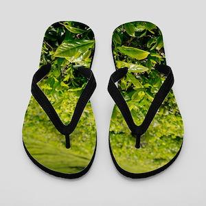 Tea gardens Flip Flops