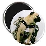 Vinny the Pug Magnet