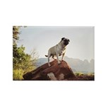 Vinny the Pug Rectangle Magnet (100 pack)