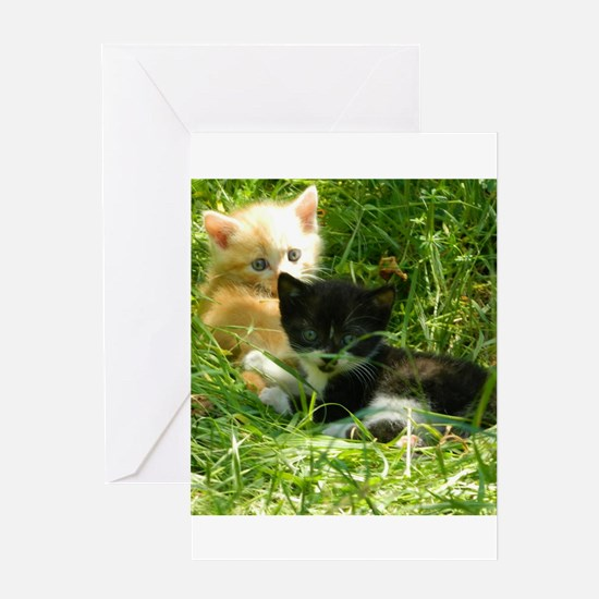 chatons Greeting Cards