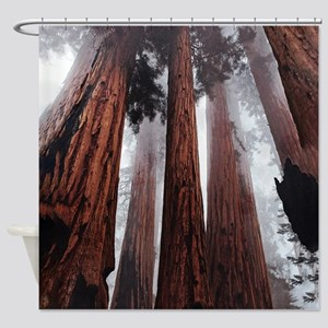 Morning Fog in Redwood Forest Shower Curtain