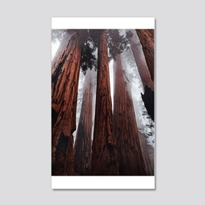 Morning Fog in Redwood Forest Wall Decal