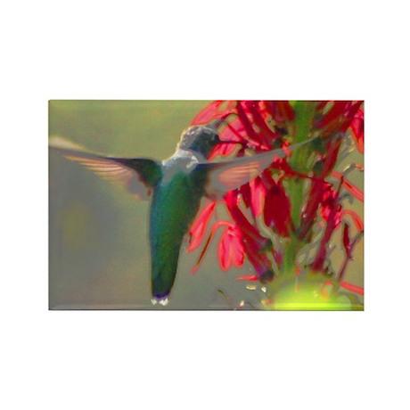 hummingbird Rectangle Magnet (10 pack)