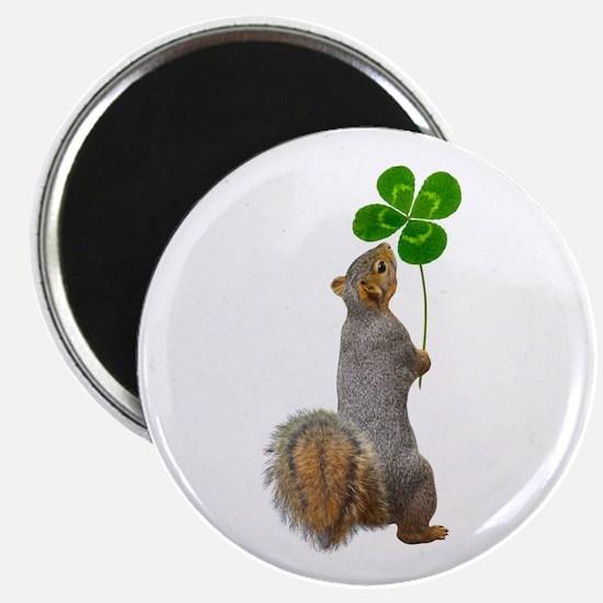 Squirrel 4 Leaf Clover Magnets