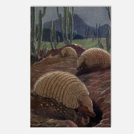 Unique Armadillos Postcards (Package of 8)