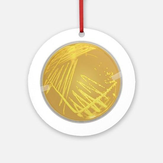 Streak Plate Ornament (Round)