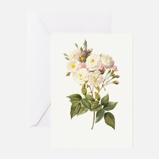 Breathtaking Redoute white flowers Notecards