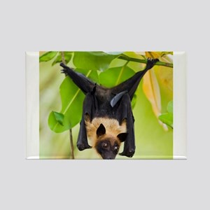 Fruit Bat Hanging In A Tree Magnets