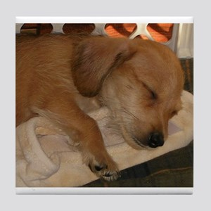 Sleepy Puppy Tile Coaster