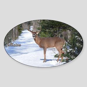 Winter Buck Oval Sticker