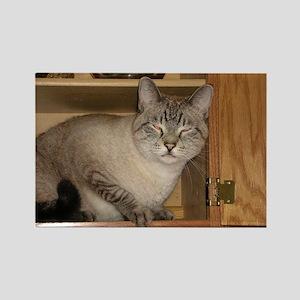 Buddha Cat Peeka-Boo! Rectangle Magnet