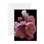 Apricot Blossom Greeting Cards (Pk of 10)