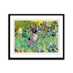 Irises-Am.Hairless T Framed Panel Print