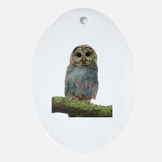 Unique Owl lover Oval Ornament