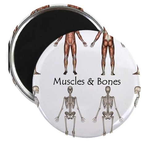 Muscles and Bones Magnet