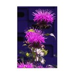 Monarda/Bee BalmPrint