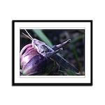Grasshopper on Succulent Print