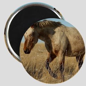 Roan horse Magnets