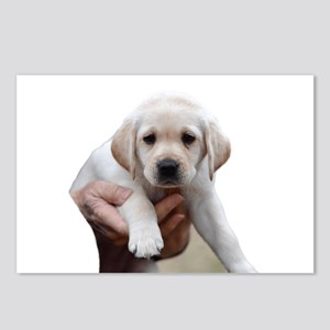 Yellow Lab Being Held Postcards (Package of 8)