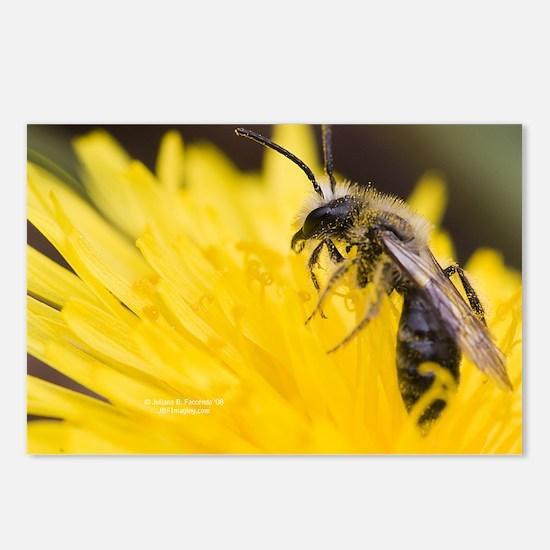 Bee on Dandelion Postcards (Package of 8)