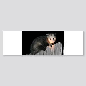 Visiting Possum Bumper Sticker