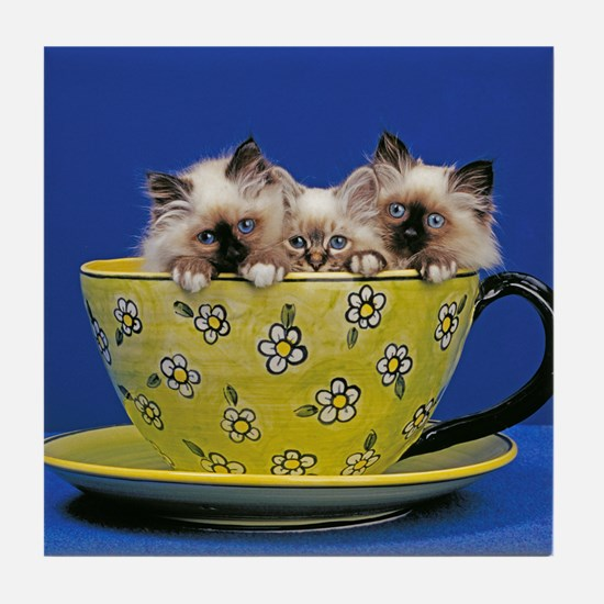 Kittens in a teacup Tile Coaster