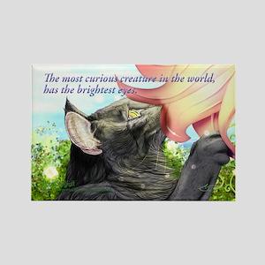 Romantic curious skogkatt Rectangle Magnet