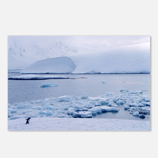 Postcards (Package of 8) - penguin