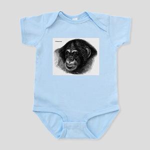 Chimpanzee Monkeys Infant Creeper