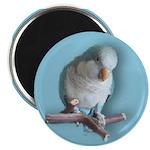 Cute Blue Quaker Magnet