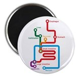 Gastrointestinal Subway Map Magnet