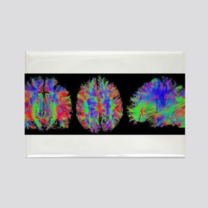 Rainbow Brain Scans Magnets