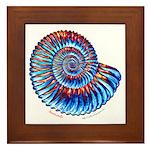 Ammonite Framed Tile