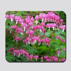Bleeding Heart Blossoms Mousepad