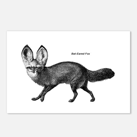 Bat-Eared Fox Postcards (Package of 8)