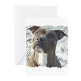 American pit bull terrier Greeting Cards (10 Pack)